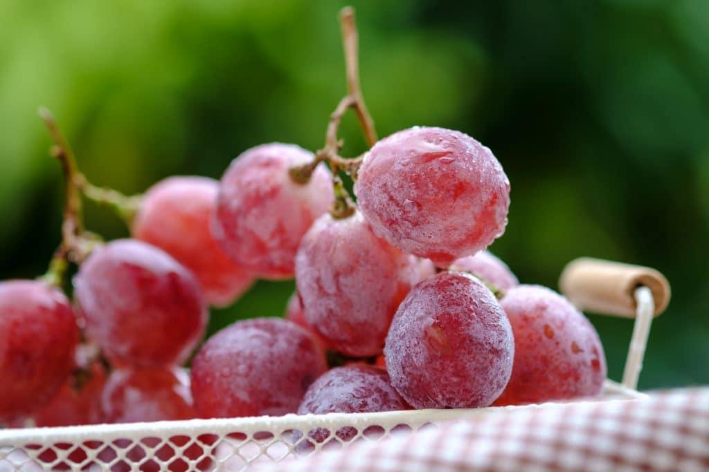 Wie lange halten gefrorene Weintrauben?
