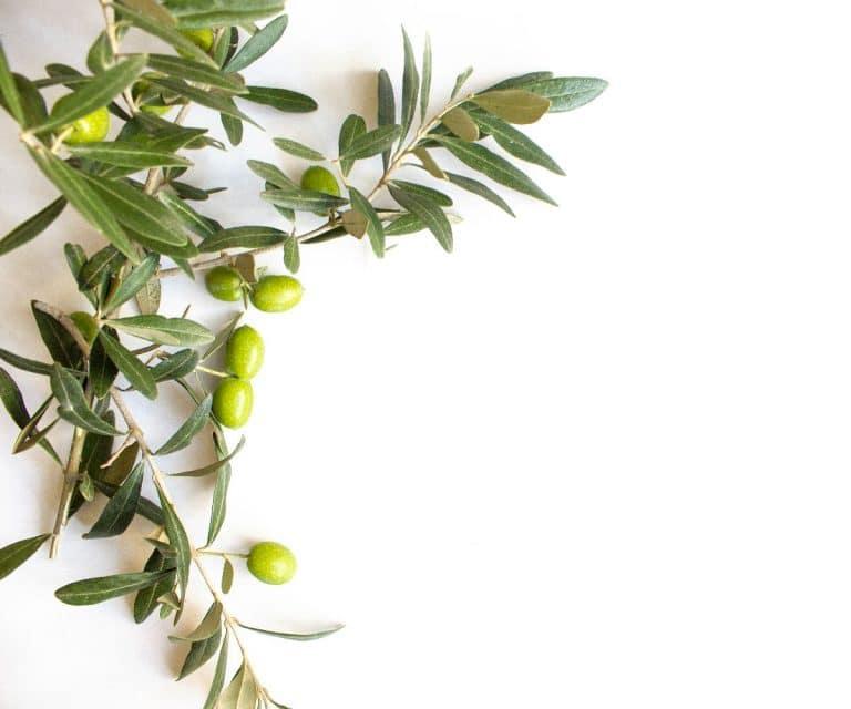 Olivenöl Haltbarkeit: Wie lange hält Olivenöl? (Und 3