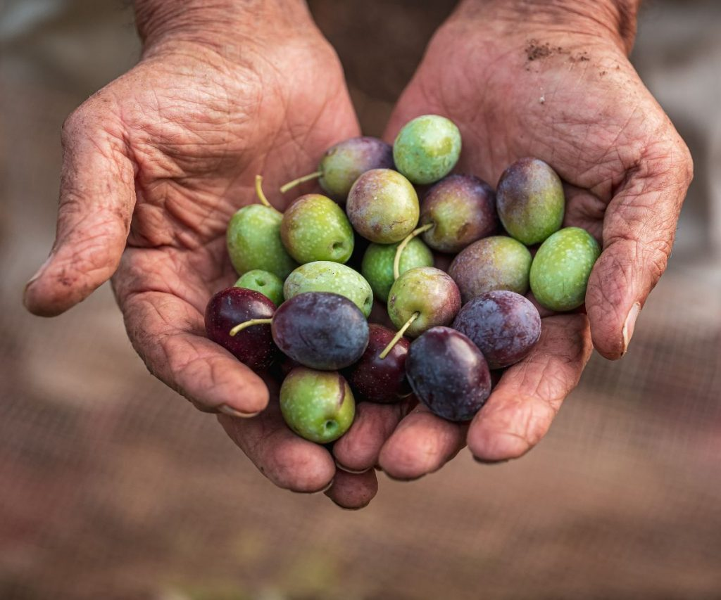 Woran erkennt man frisches Olivenöl?